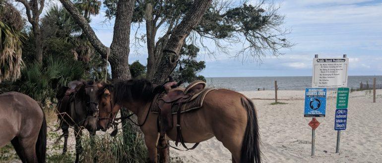 HORSEBACK RIDING ON THE BEACH DAUFUSKIE ISLAND MARSH TACKY